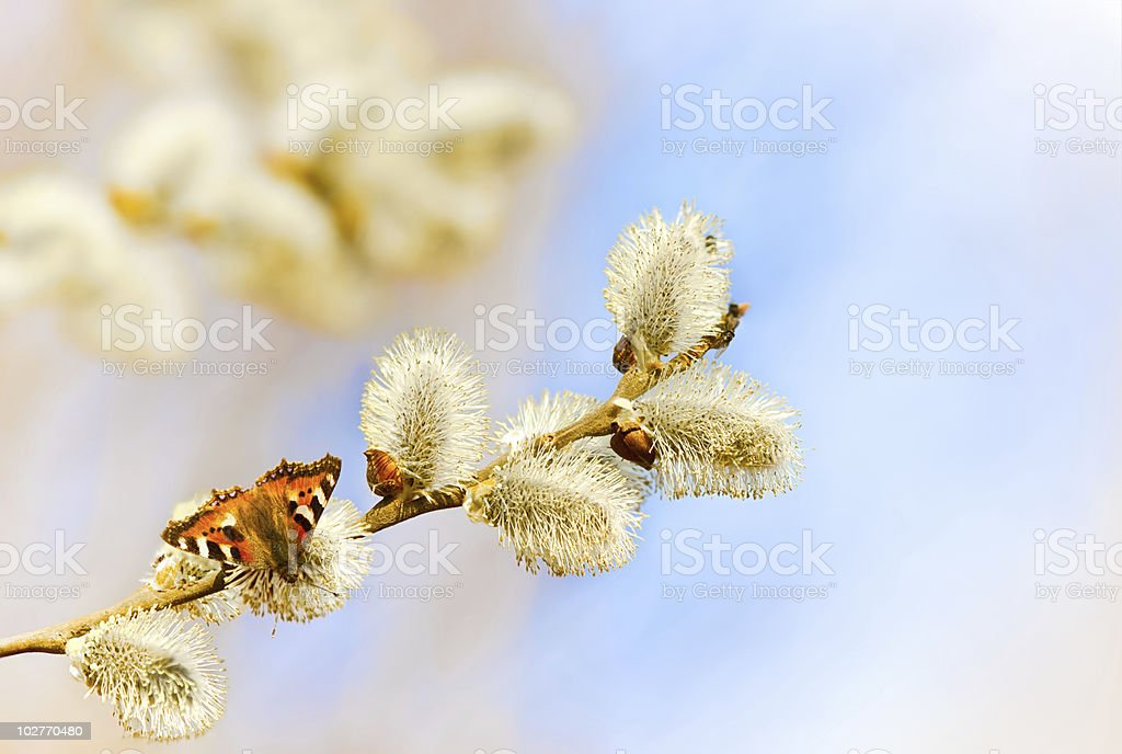 Fine butterfly on a fluffy branch royalty-free stock photo