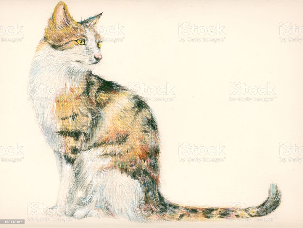 Fine color drawings of cats royalty-free stock photo
