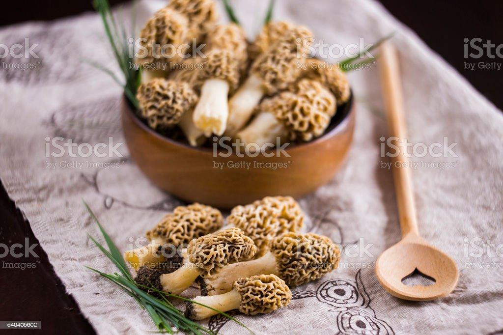 Fine cuisine, Morchella esculenta , morel mushroom stock photo