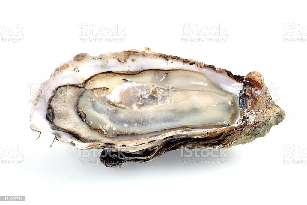 Fine de Claire Oyster Isolated on White stock photo
