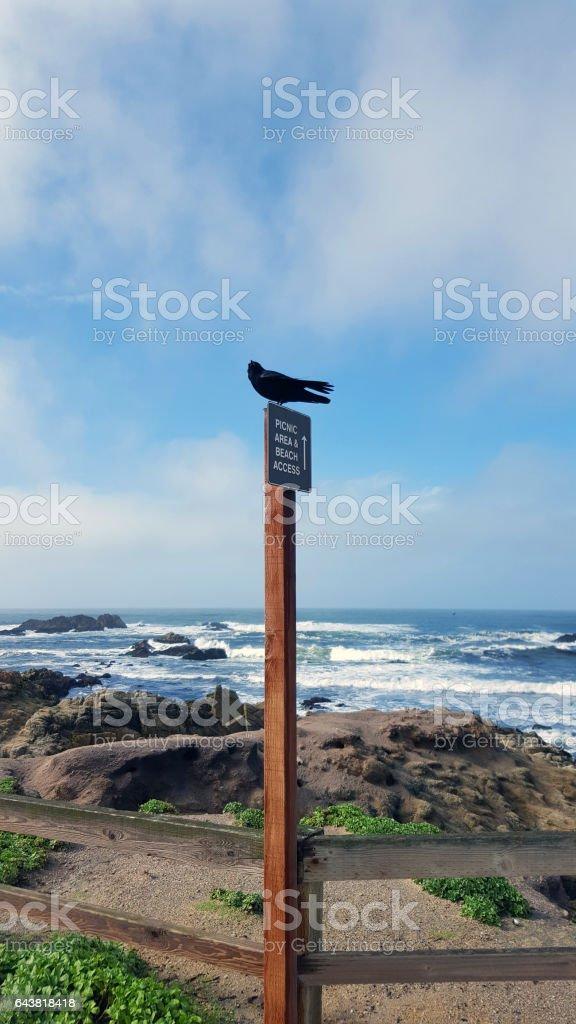 Fine Feathered Tourist Visiting Pebble Beach Carmel California stock photo
