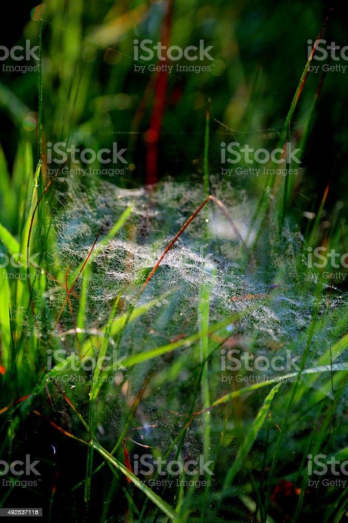 Fine gossamer spider web on woodland floor stock photo