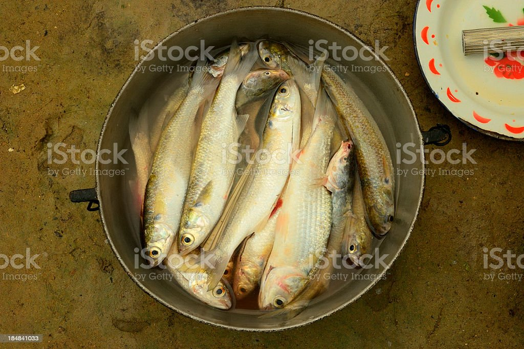 Fine Kettle Of Fish stock photo