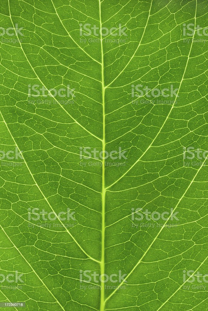 Fine leaf texture royalty-free stock photo