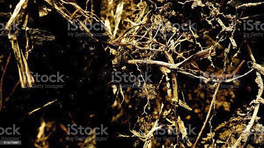 fine roots stock photo