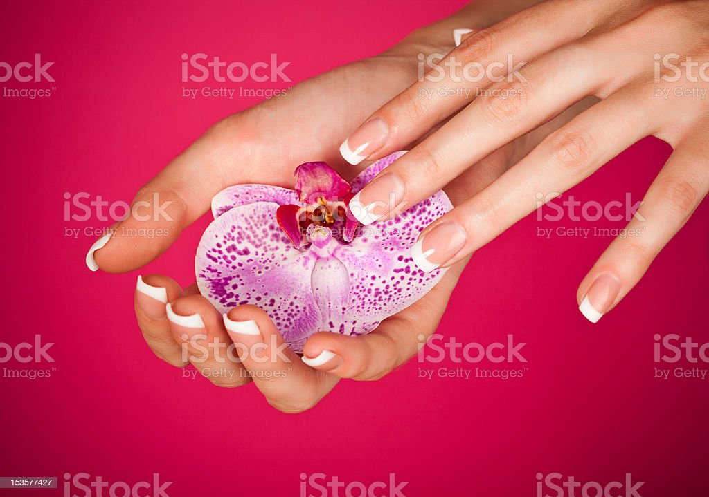 Finger with beautiful manicure touch a wet pink rose royalty-free stock photo