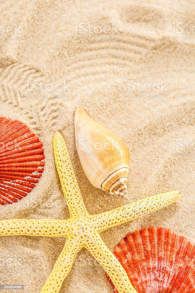 Fingerfish and seashells in sand stock photo