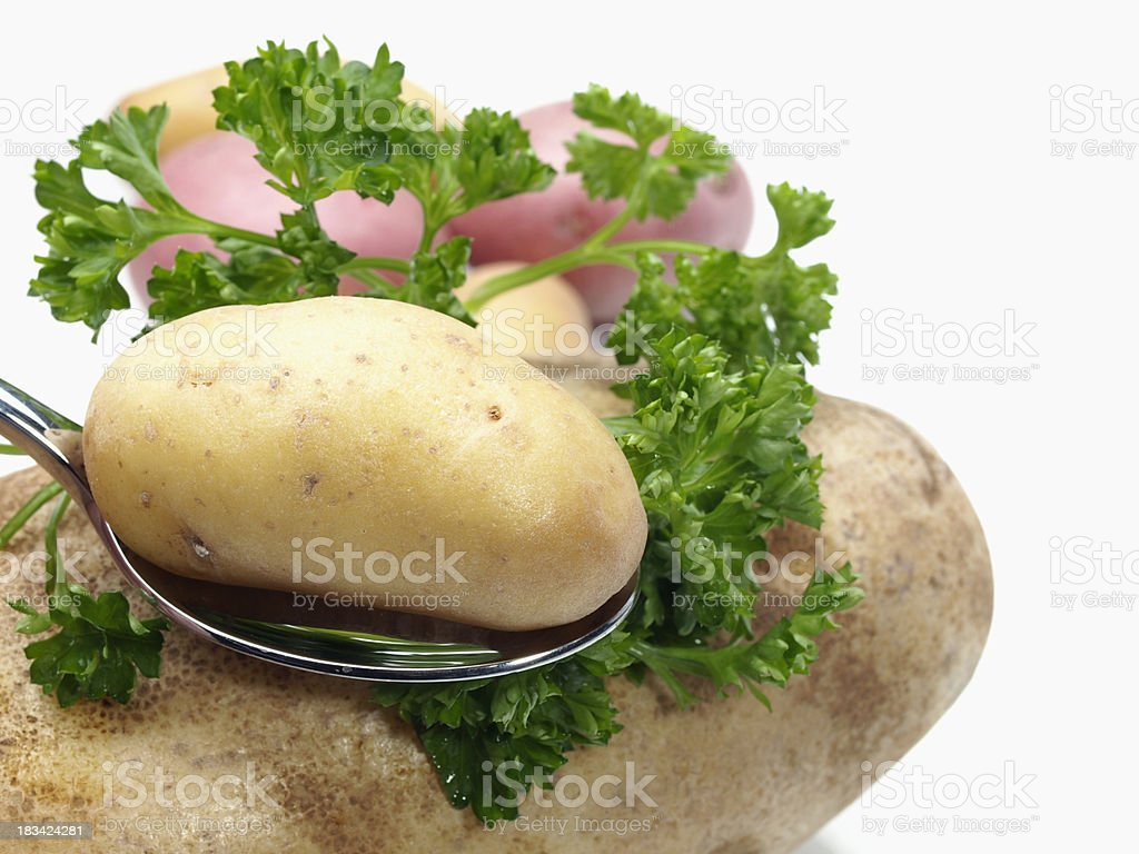 Fingerling Potato on Spoon stock photo
