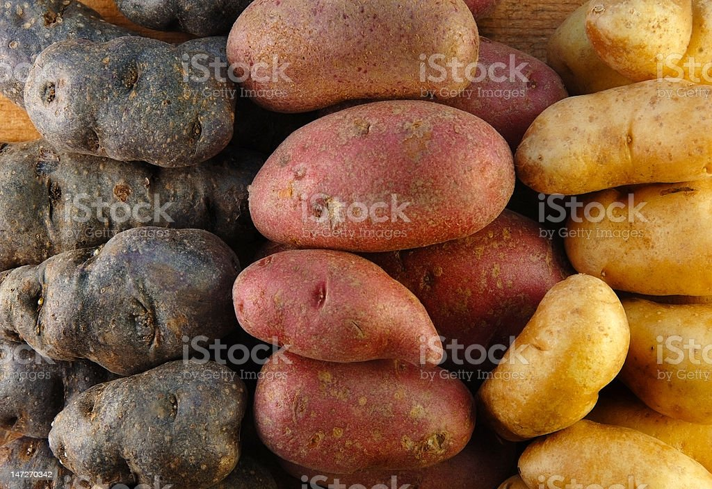 Fingerling Potatoes in Three Colors stock photo