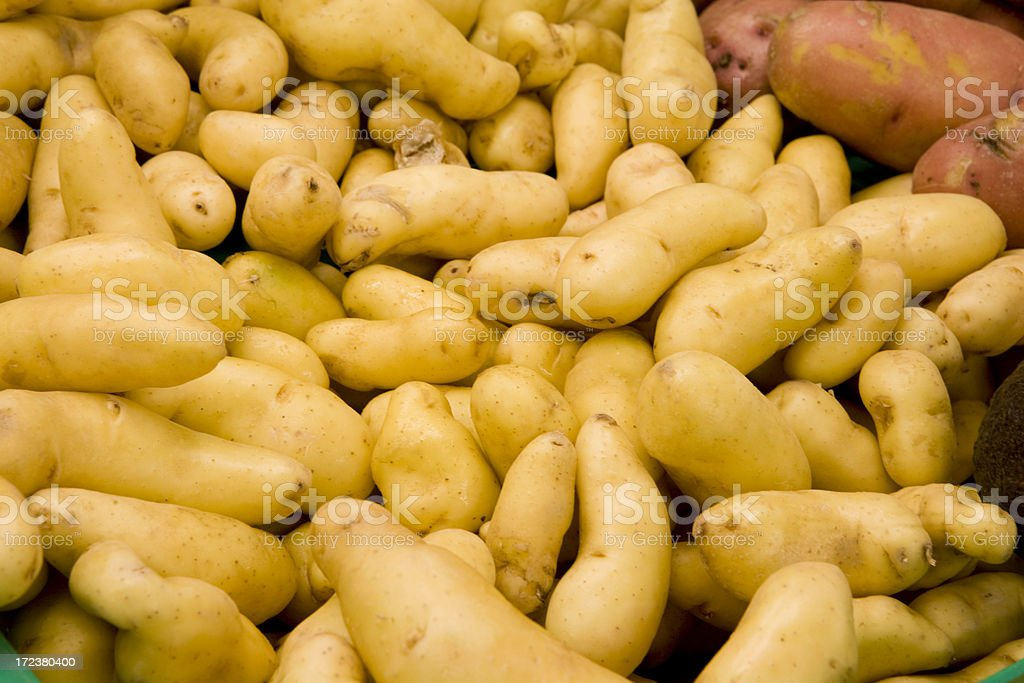 Fingerling Potatoes royalty-free stock photo