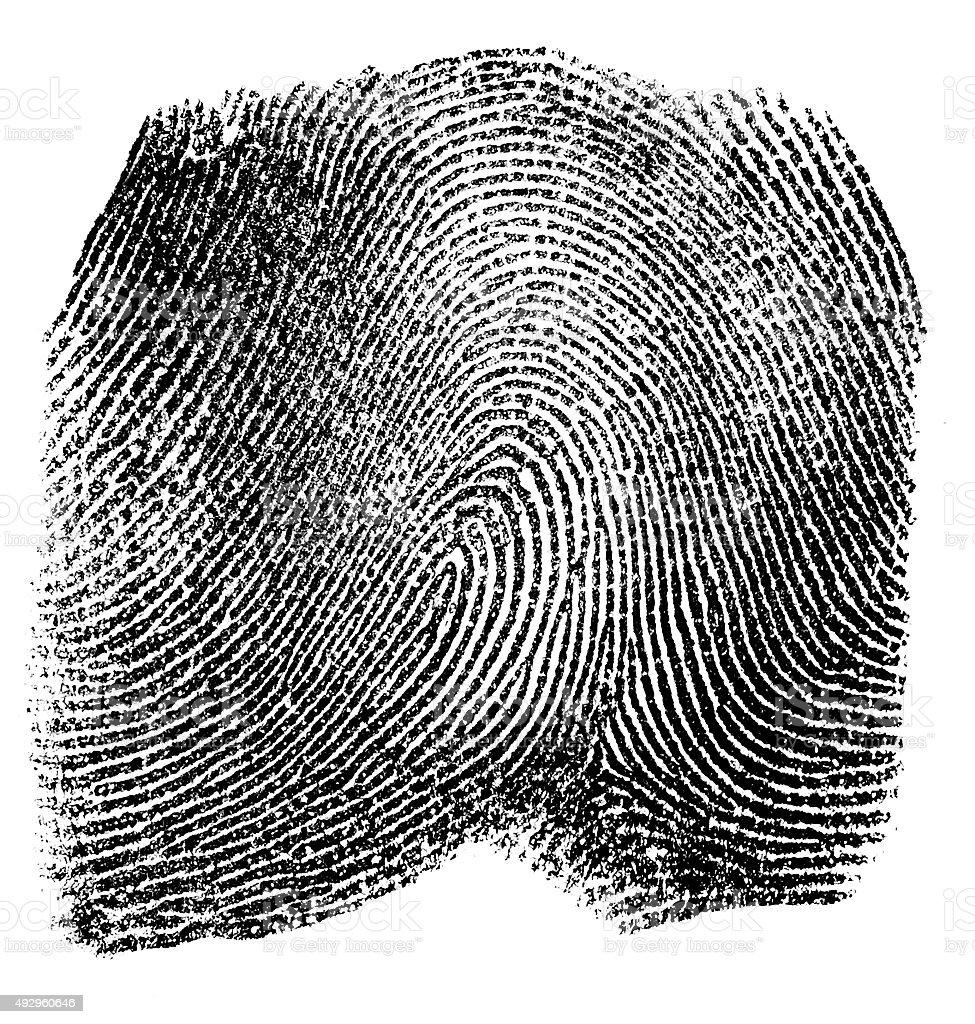 Fingerprint on white background stock photo