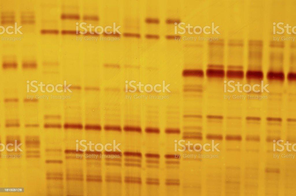 DNA fingerprint stock photo