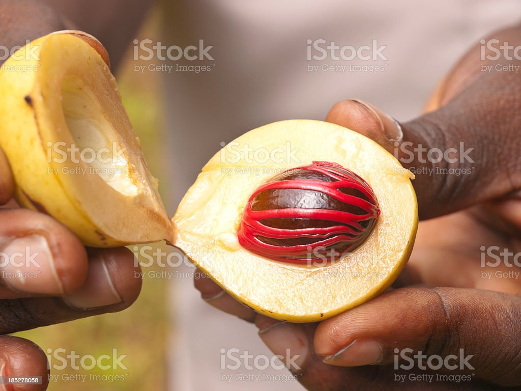 Fingers each hold half of an open Nutmeg with seed showing stock photo