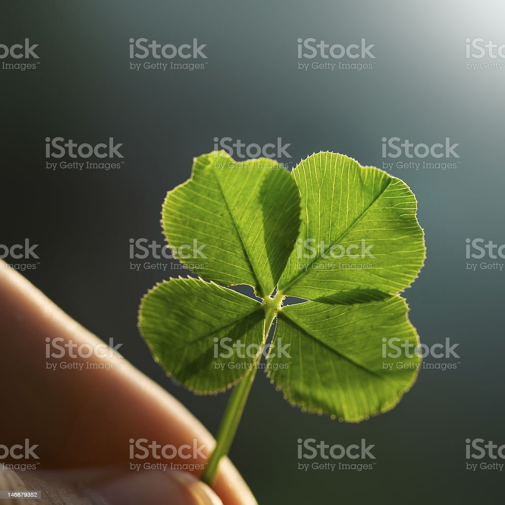 Fingers holding backlit four leaf clover stock photo