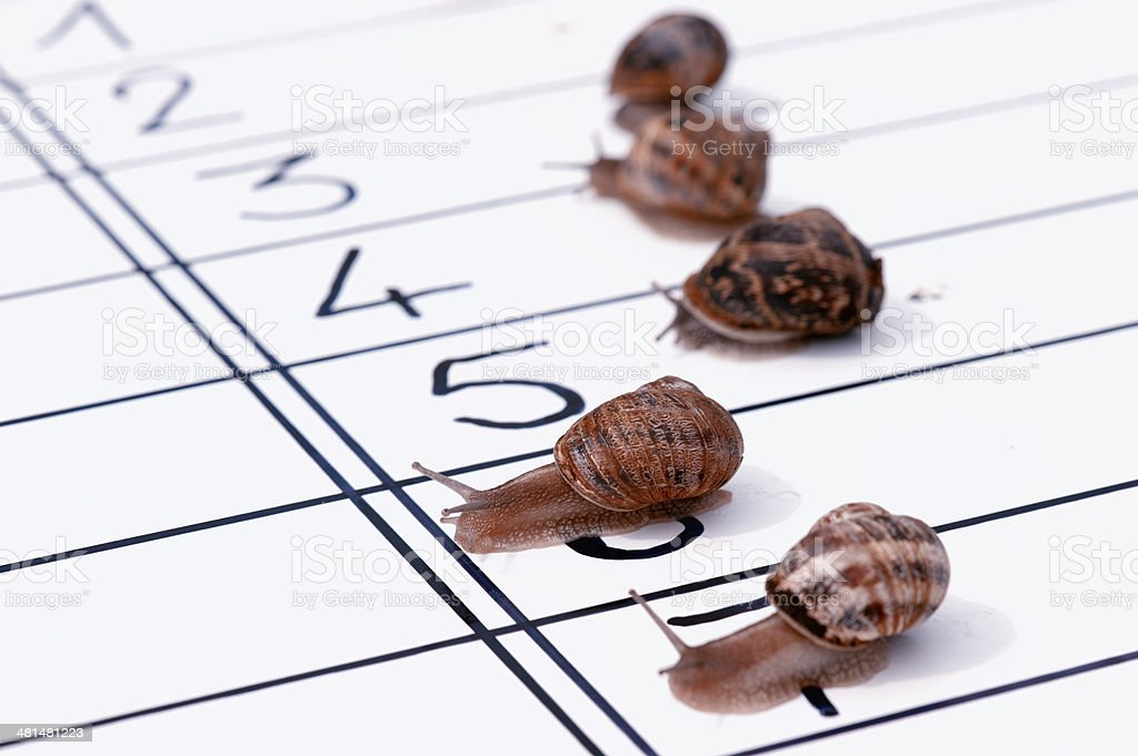 finish of racing snails royalty-free stock photo