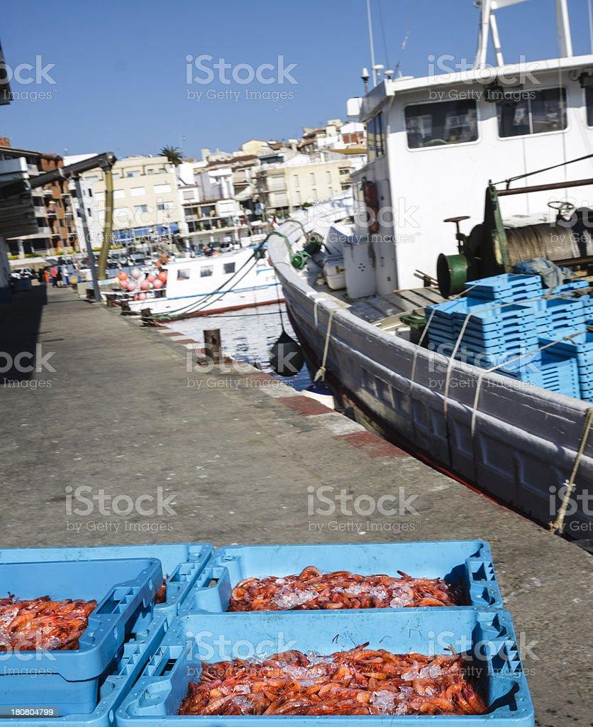 finished prawn fishing royalty-free stock photo