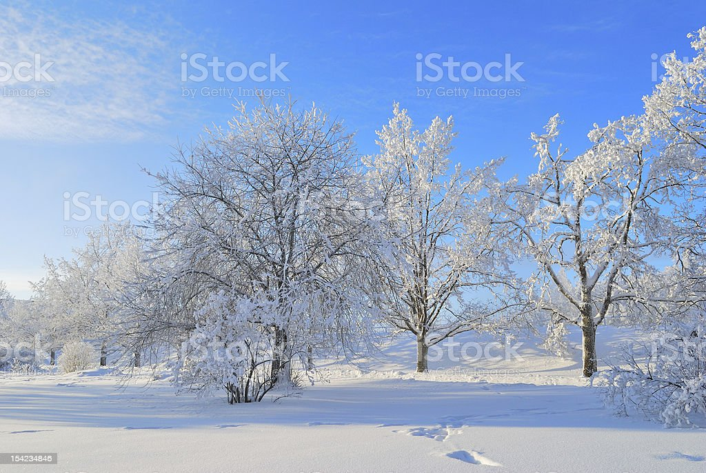Finland. Winter Park in Imatra royalty-free stock photo