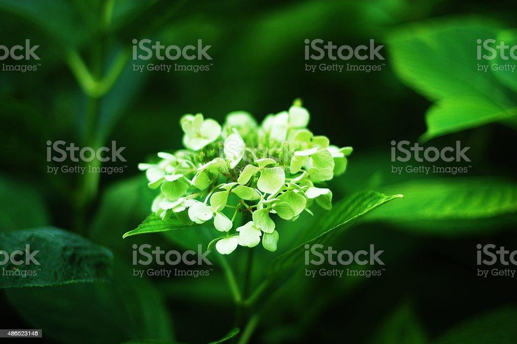 fiore stock photo