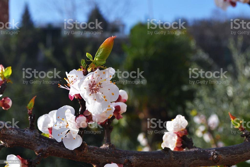 Fiori a primavera stock photo