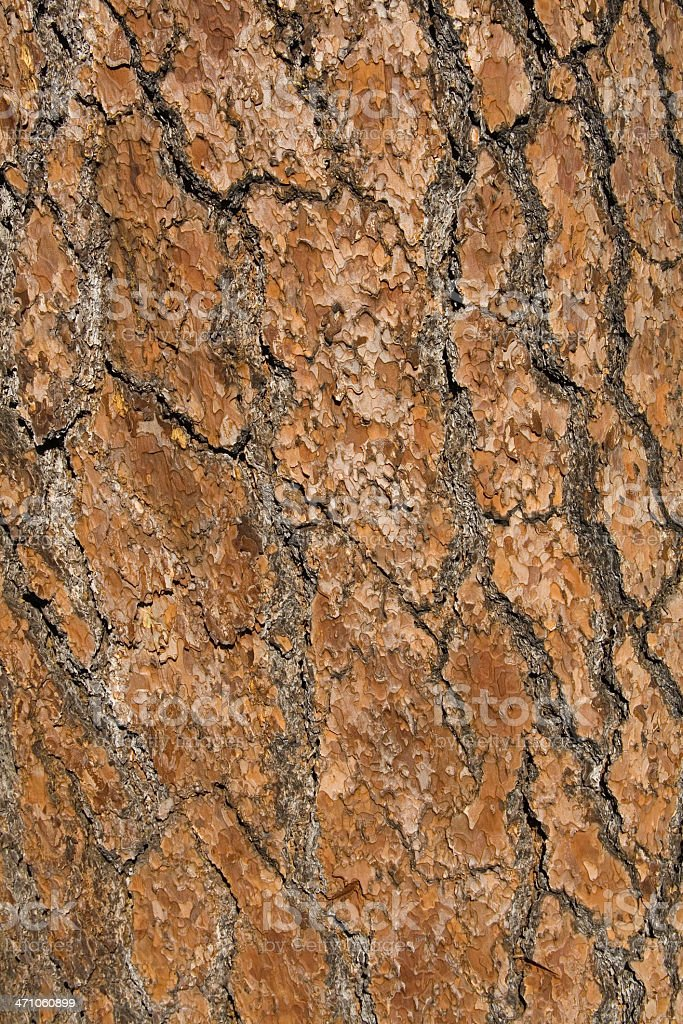 Fir bark overview royalty-free stock photo