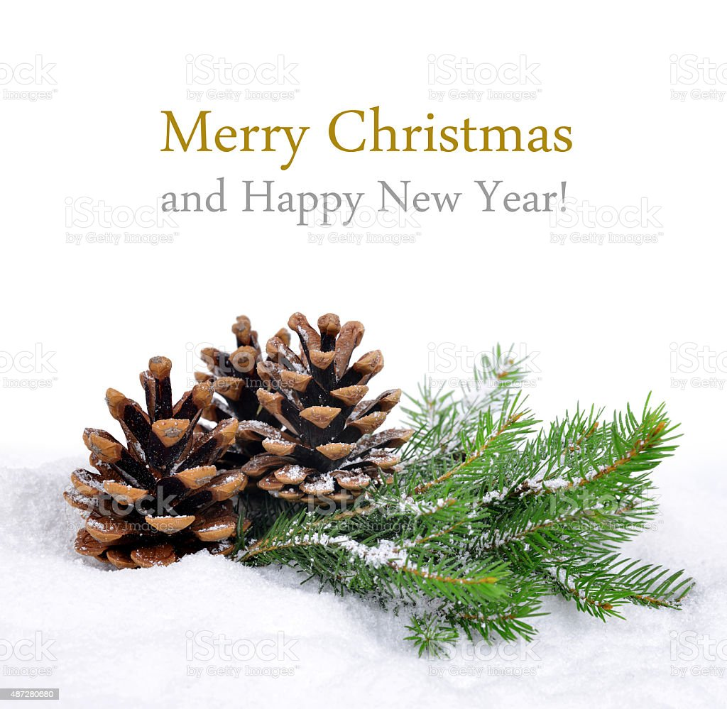 Fir branches with cones stock photo