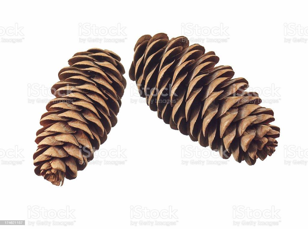 fir cones stock photo