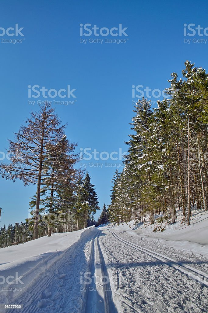 fir forest with cross-country ski run stock photo