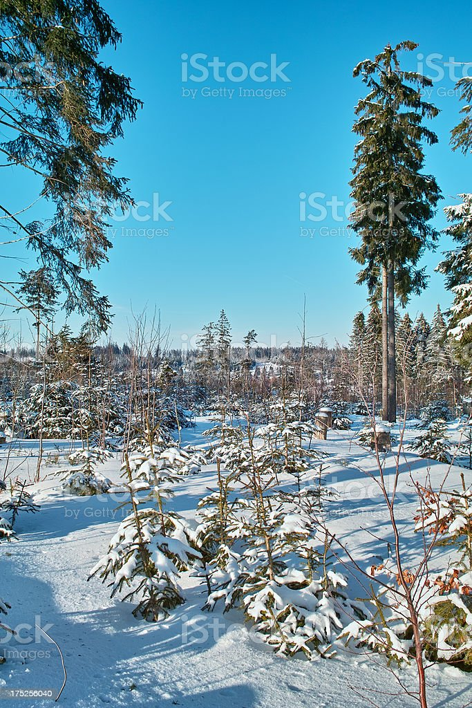 fir in snow royalty-free stock photo
