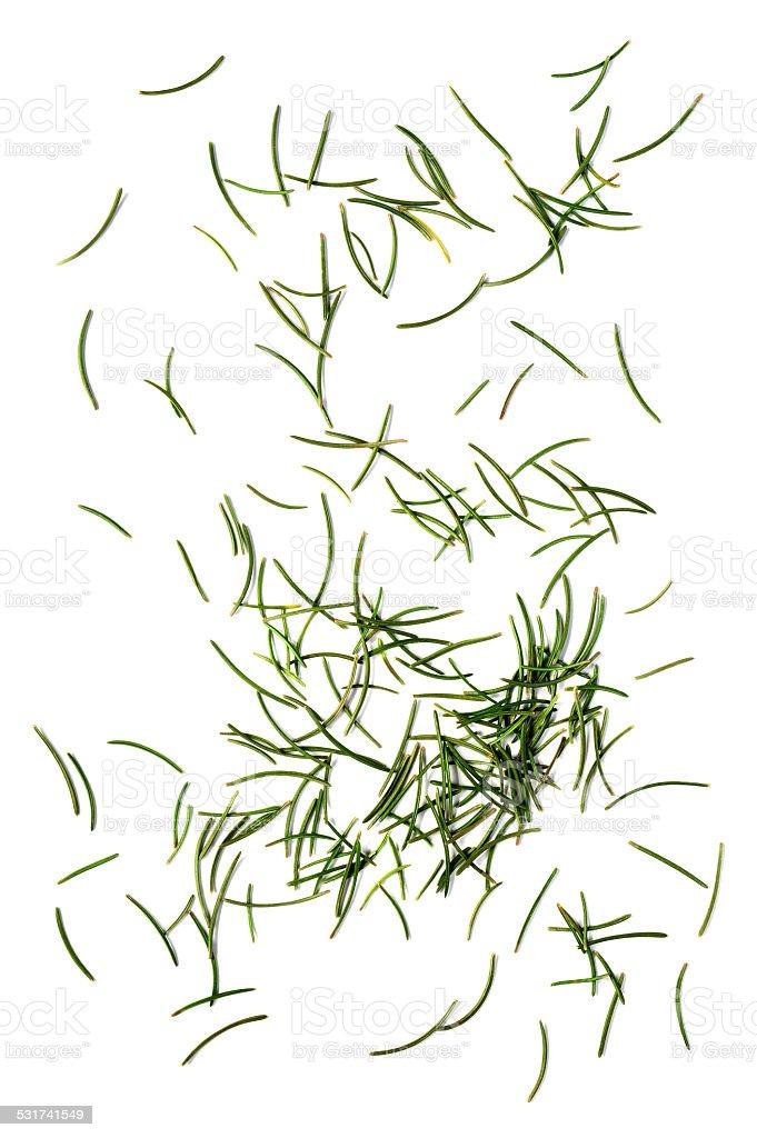 fir needles stock photo
