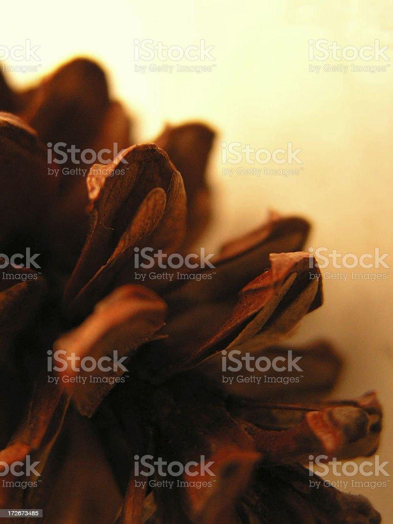 fir royalty-free stock photo