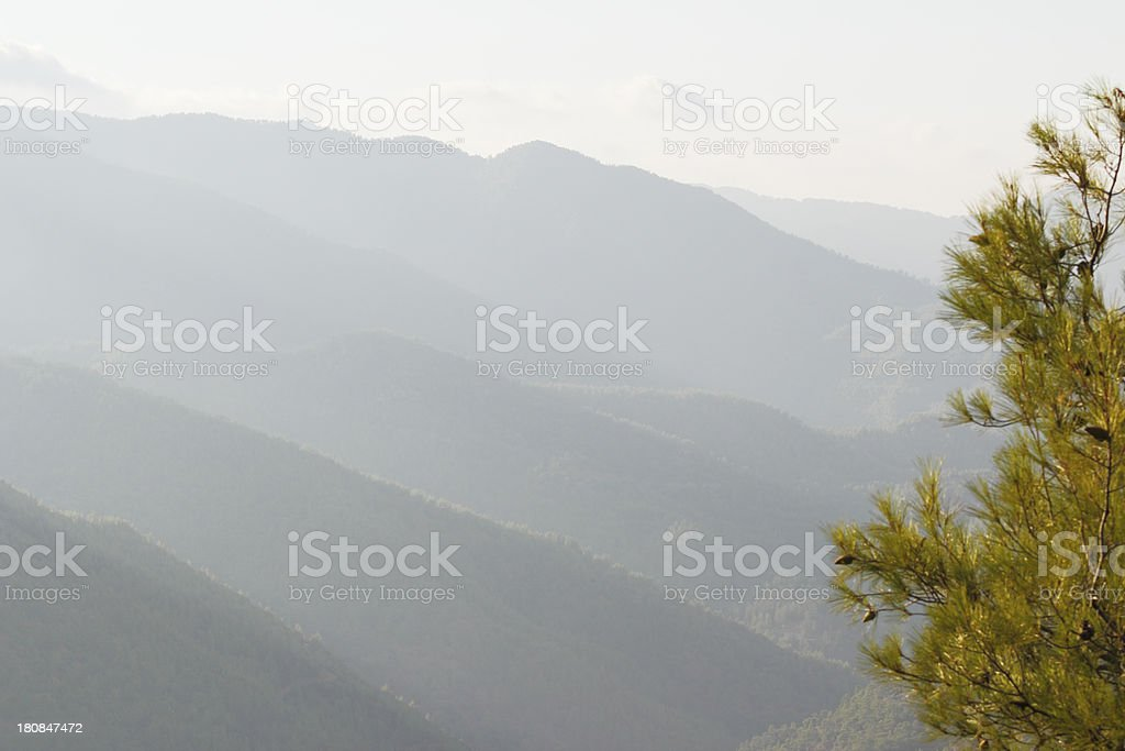 fir tree against morning foggy Troodos cypriate mountains  Cyprus stock photo