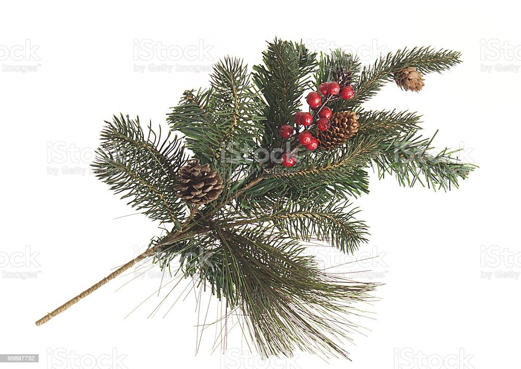 Fir tree branch with cones and red berries stock photo