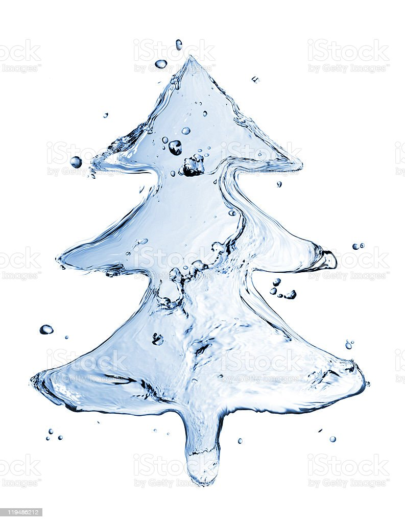 fir tree from water splash isolated on white stock photo