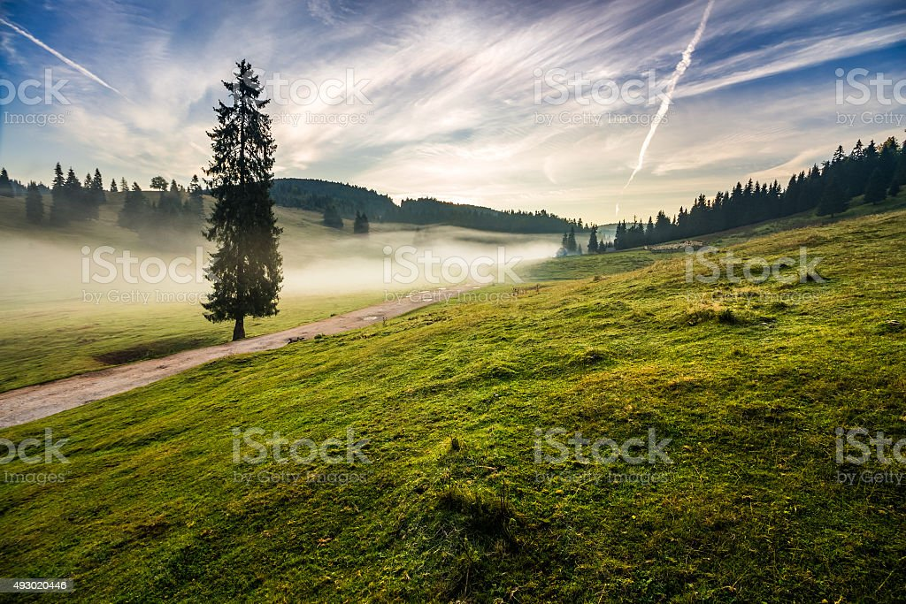 fir tree in fog by the road near mountains stock photo