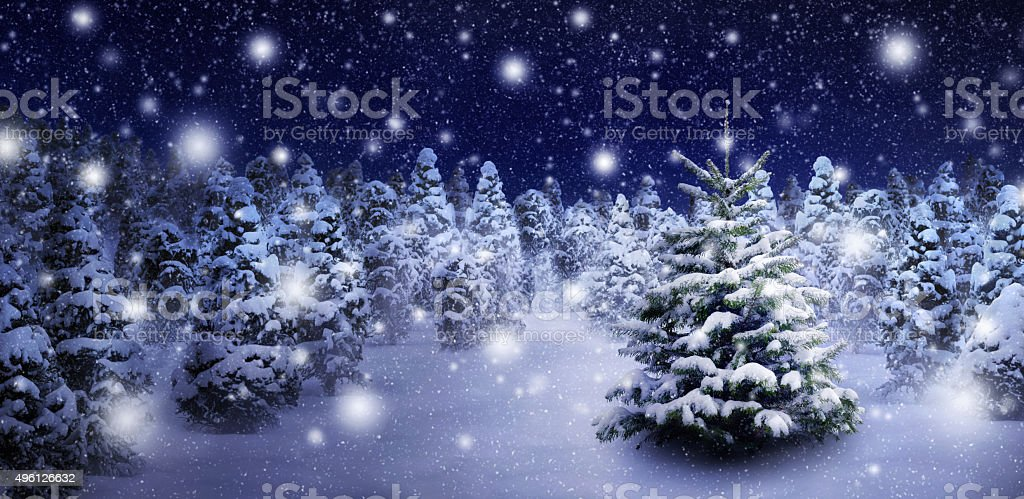Fir tree in snowy night stock photo