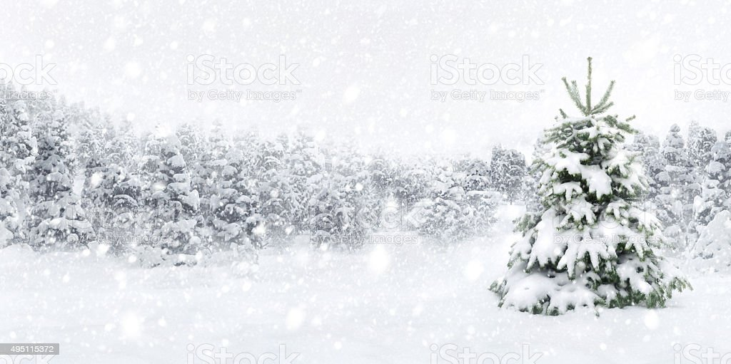 Fir tree in thick snow stock photo
