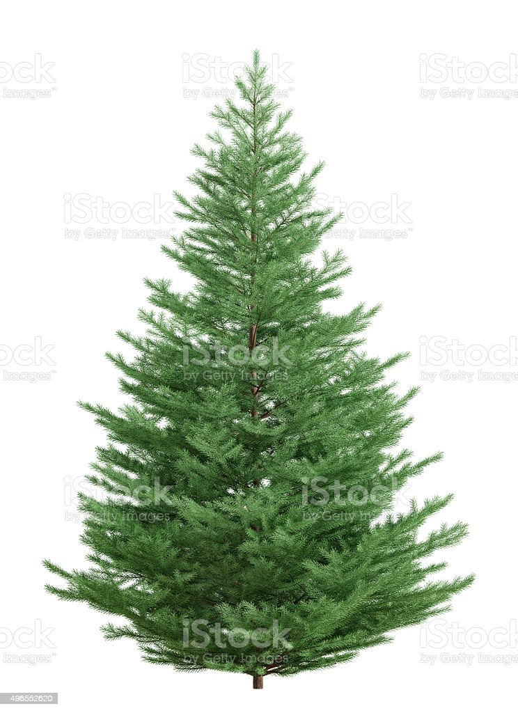 Fir tree isolated over white 3d rendering stock photo