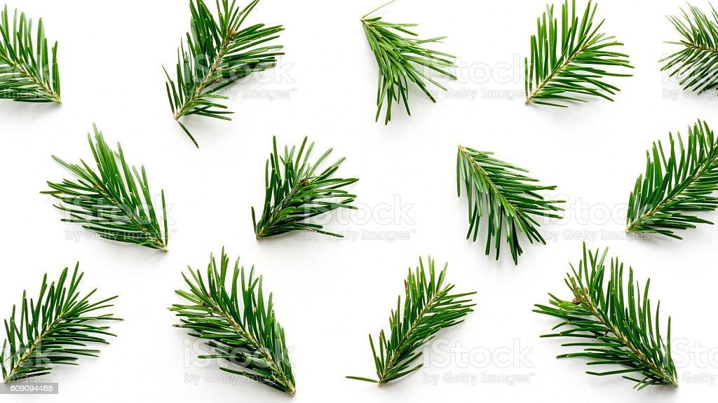 Fir twigs pattern foto de stock royalty-free