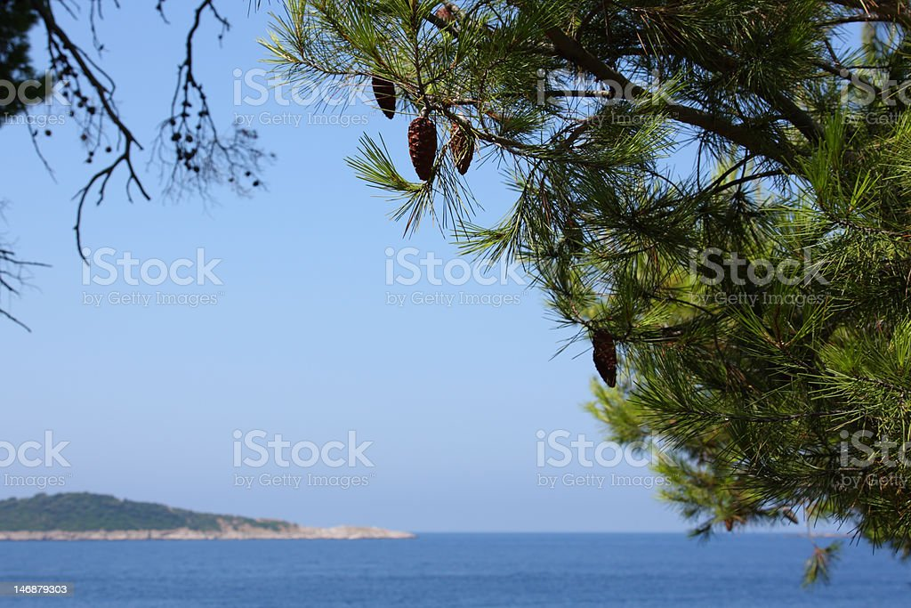 Fir twigs,blue sky and sea royalty-free stock photo
