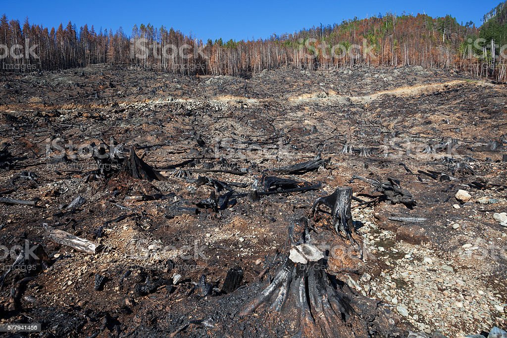 Fire and Deforestation stock photo