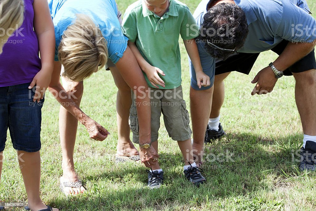 Fire ant attack stock photo