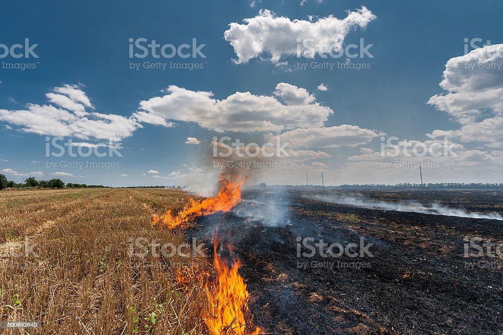 Fire burns stubble on the field destroy summer. stock photo