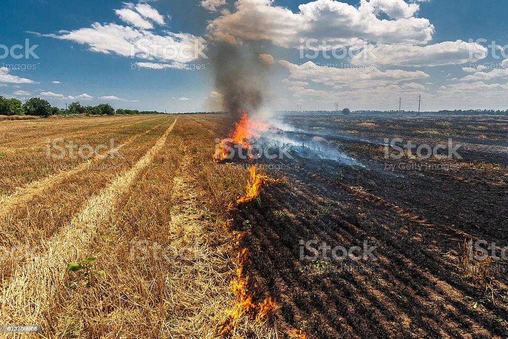 Fire burns stubble on the field destroy summer stock photo