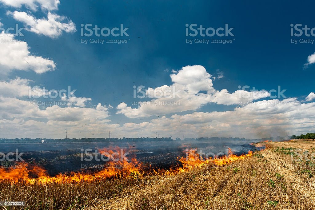Fire burns stubble on the field destroy summer stock photo