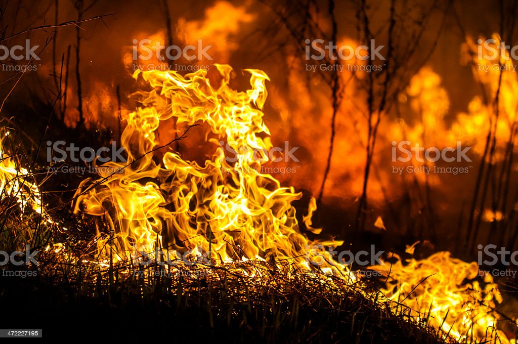 A fire in a bush and all around stock photo