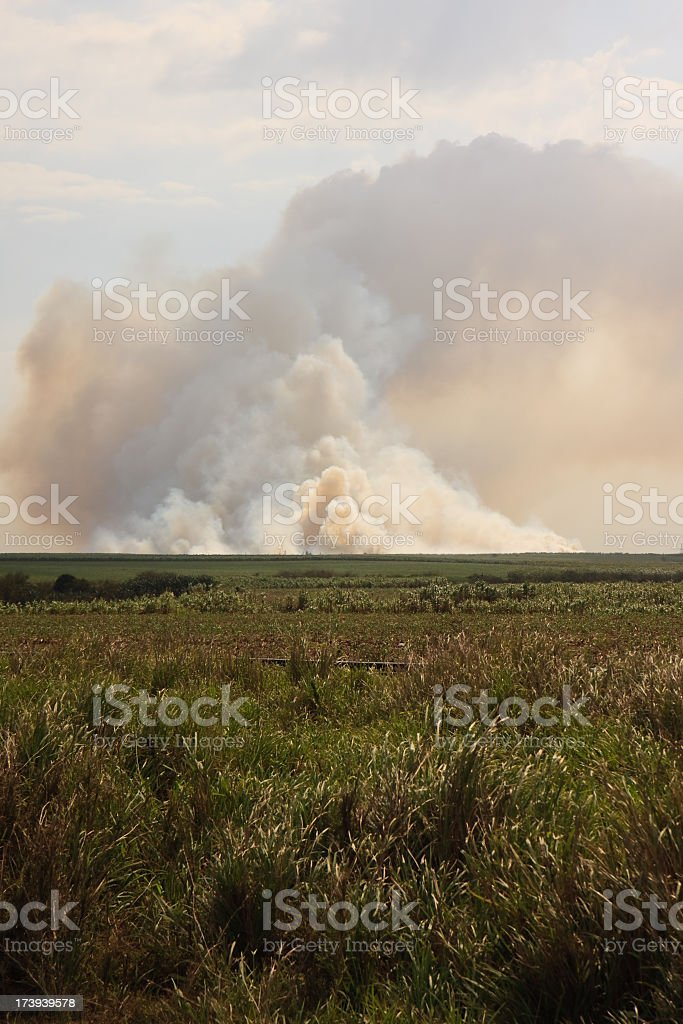 Fire in nature royalty-free stock photo