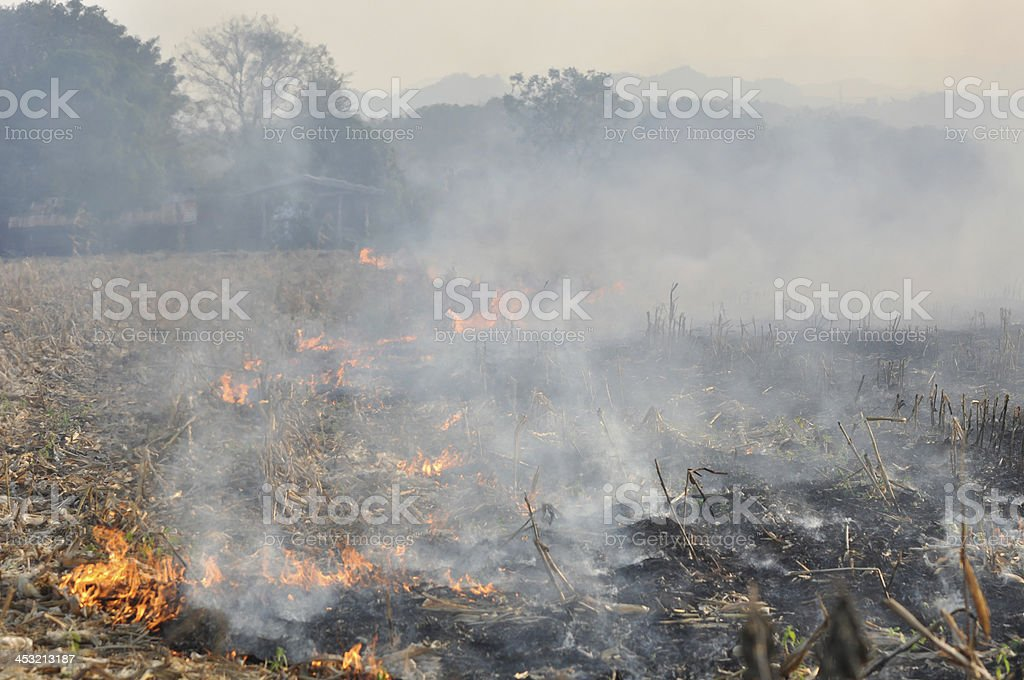 Fire in the corn field after harvest royalty-free stock photo