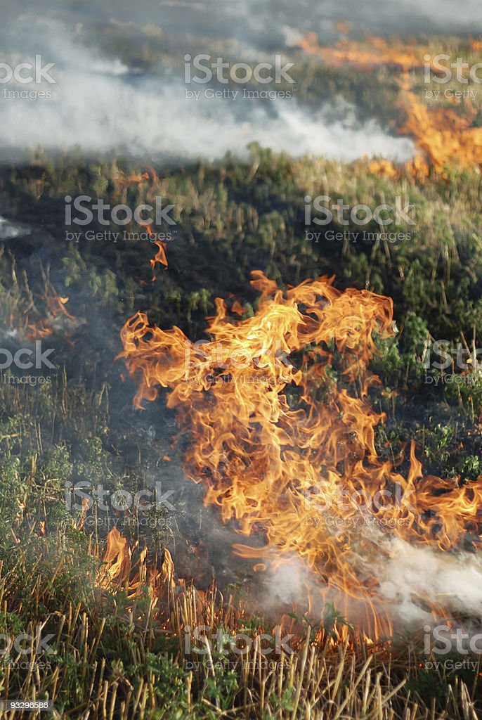 Fire in the dry grass field stock photo