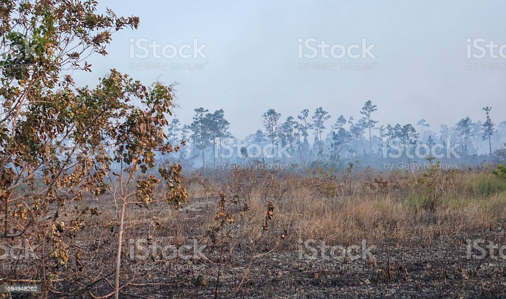 Fire in the Everglades National Park - burning trees Lizenzfreies stock-foto