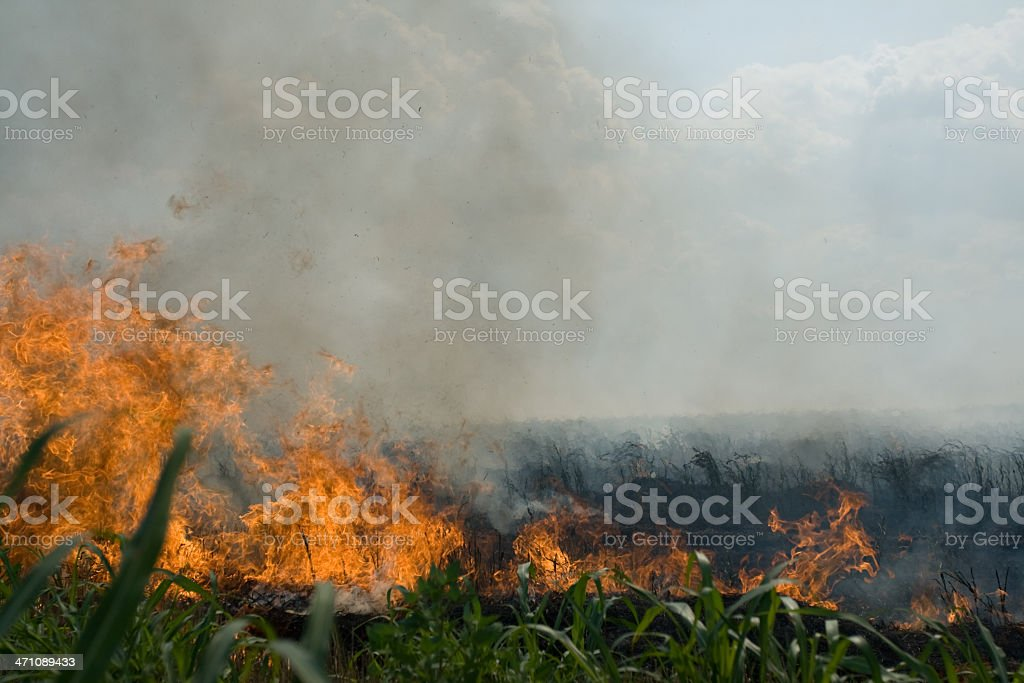 Fire in wheat field royalty-free stock photo